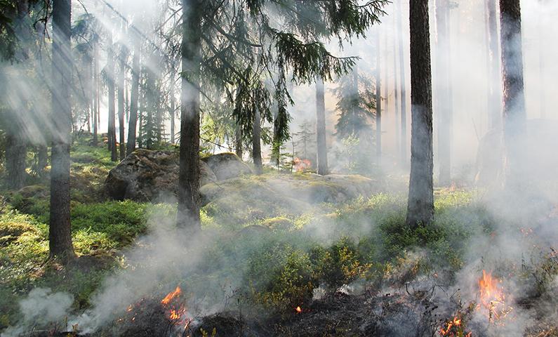 Sistemi di videosorveglianza per la lotta agli incendi